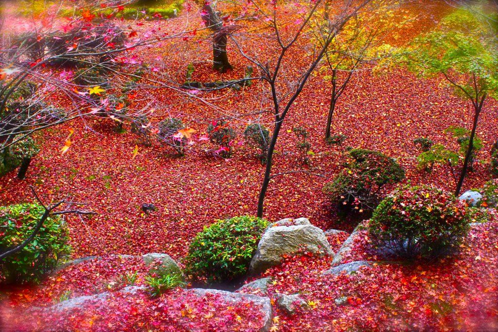 【大窪寺】アクセス便利な、香川の美しすぎる紅葉スポット